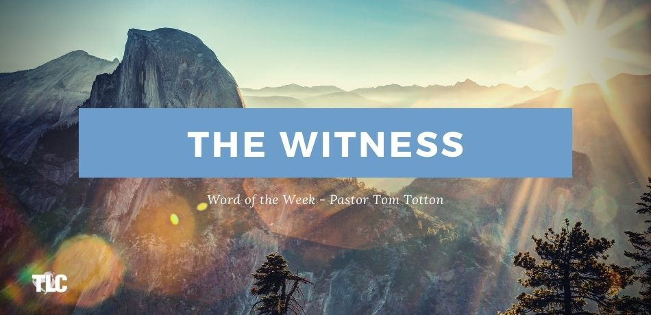 The Witness