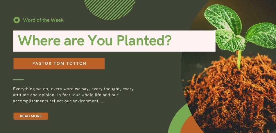 Where are You Planted?